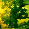 Внутрь Фантастического Дерева