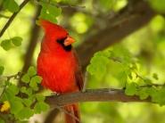 Картинка из Птицы